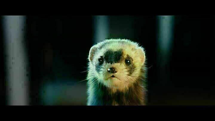 Vaterfreuden Trailer Deutsch Film Critic
