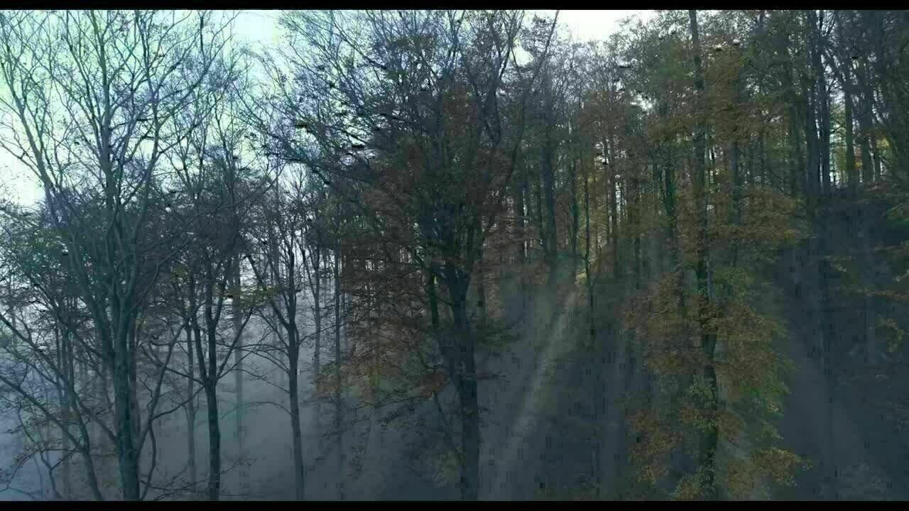 Das Geheime Leben Der Baume Trailer Deutsch Film Critic De