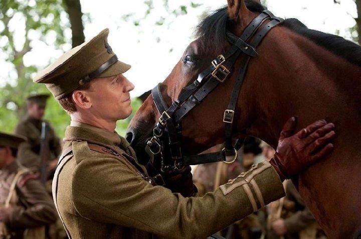 Gefährten Film Pferd