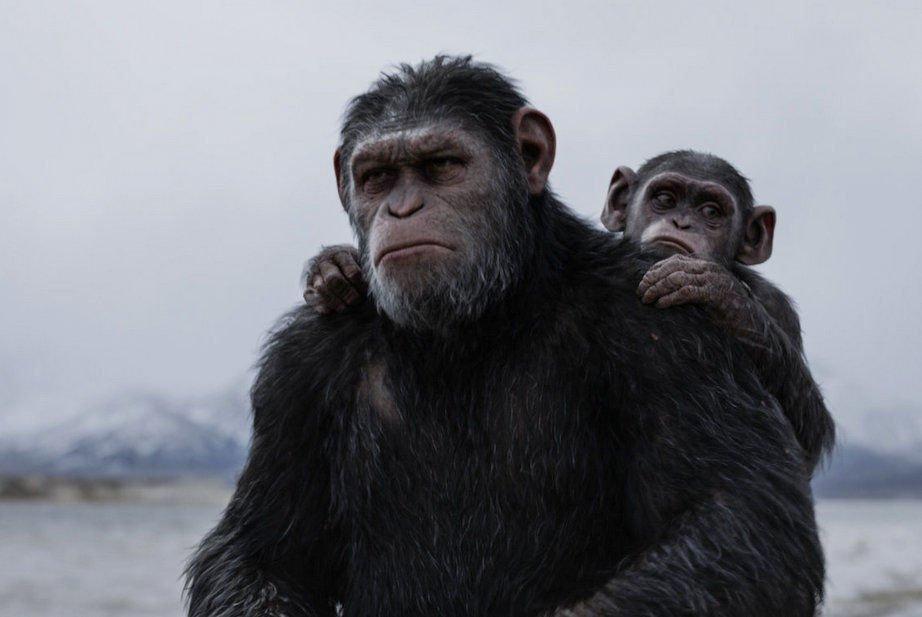 Planet Der Affen Survival Poster